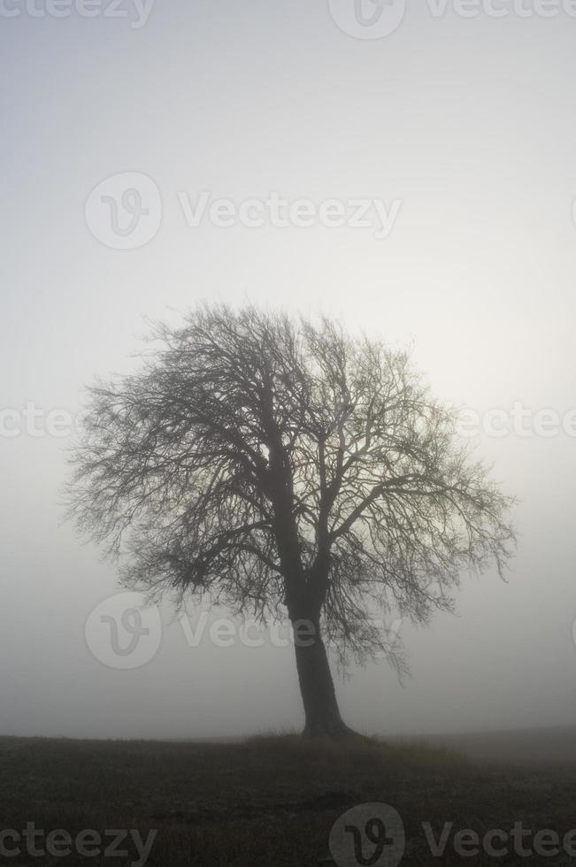 enkele winterboom in mist foto