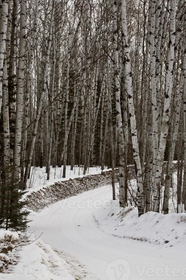 weg naar het meer in de winter foto