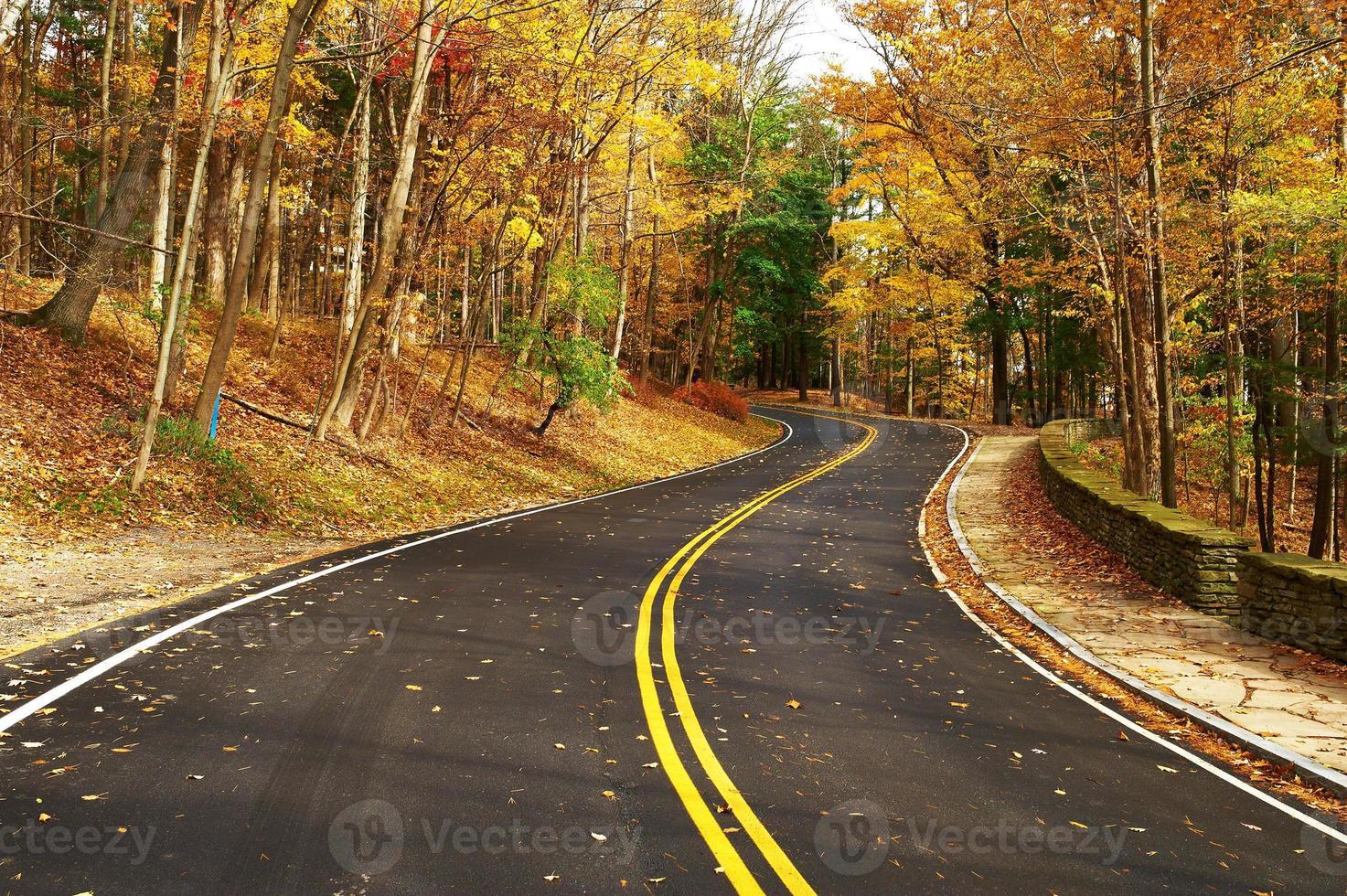 herfst scène met weg in het bos foto