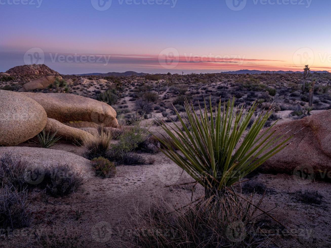 Joshua Tree National Park foto