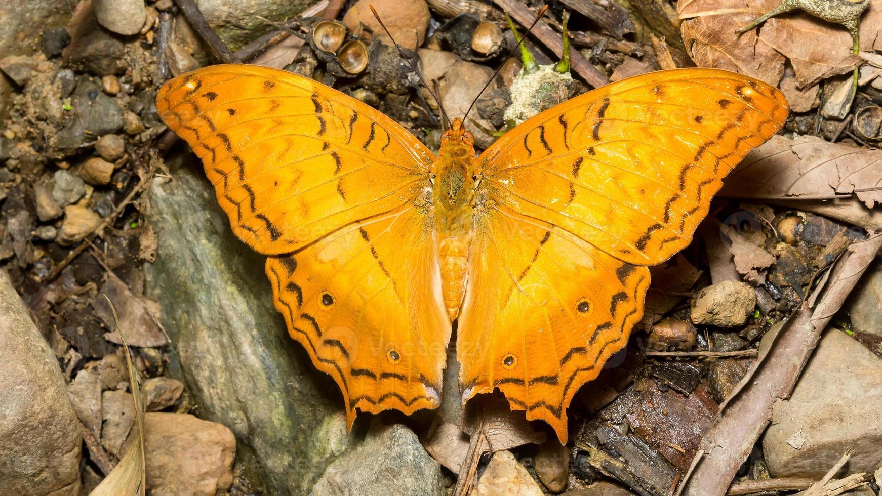 vlinder. campingverbod krang foto