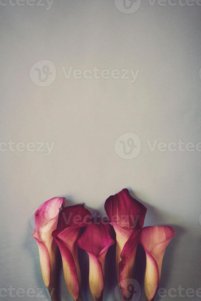 calla lillies foto