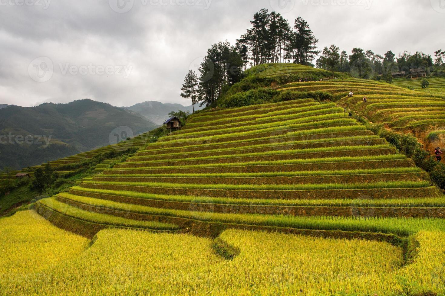 rijstterrassen in Vietnam foto