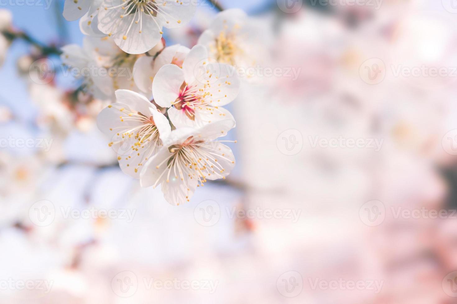 abstracte kersenbloesem van liefde, soft focus, achtergrond foto