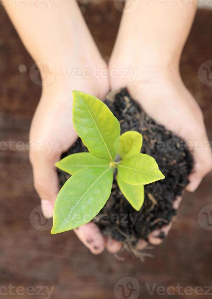 vrouwenhand die een weinig groene boominstallatie houden foto