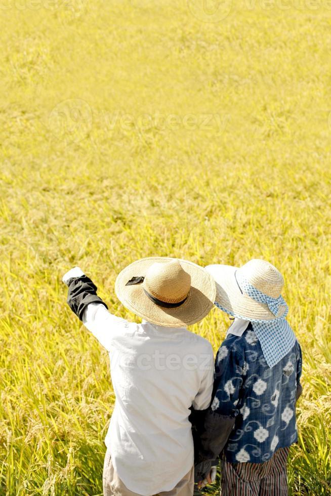 goede oogst foto