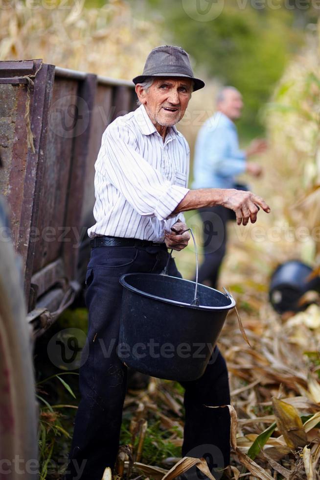 oude man op maïs oogst met een emmer foto