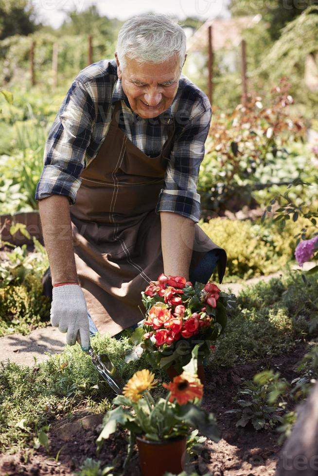 mijn bloemen zullen beter in de grond staan foto