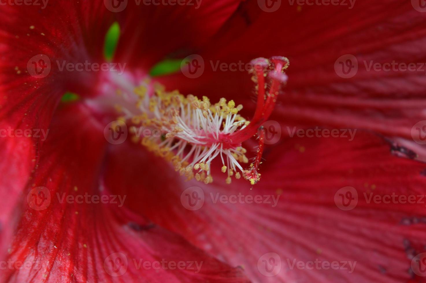 rode bloemclose-up foto
