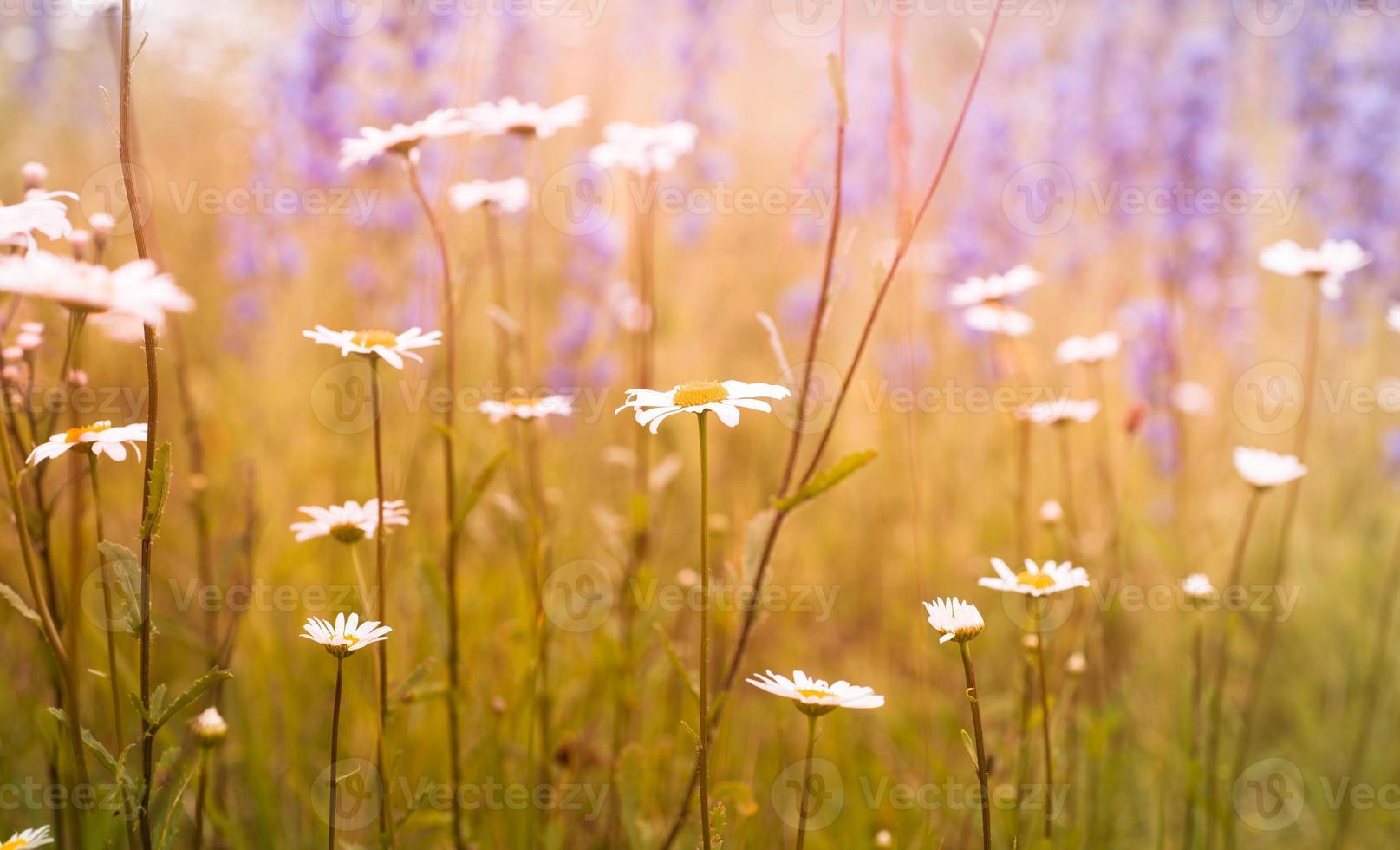 weide bloemen foto
