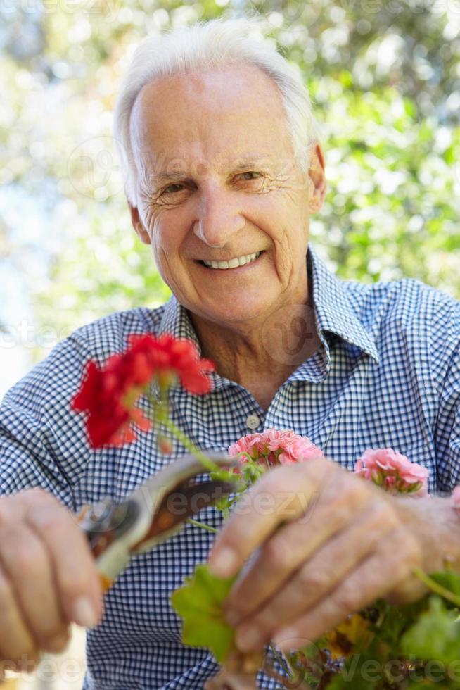 een glimlachende oudere man die geraniums snoeit foto