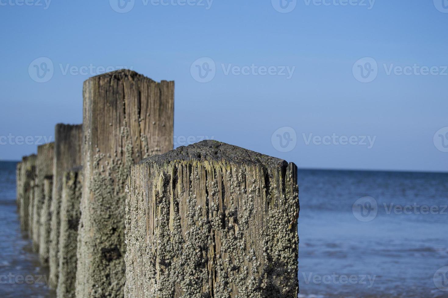 houten steiger close-up foto