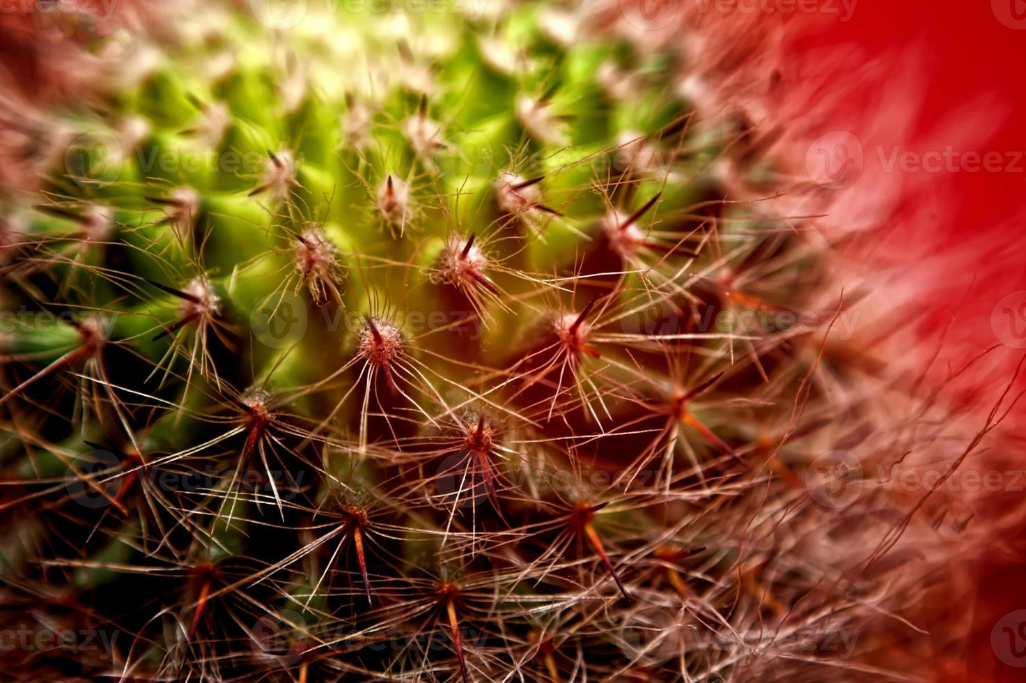 cactus- close-up foto