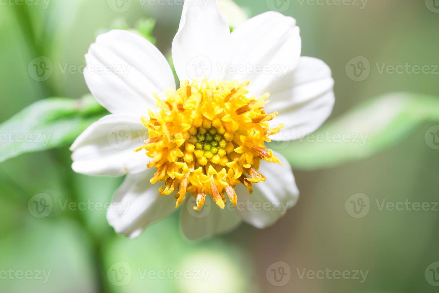 bloem op de achtergrond wazig tuin foto