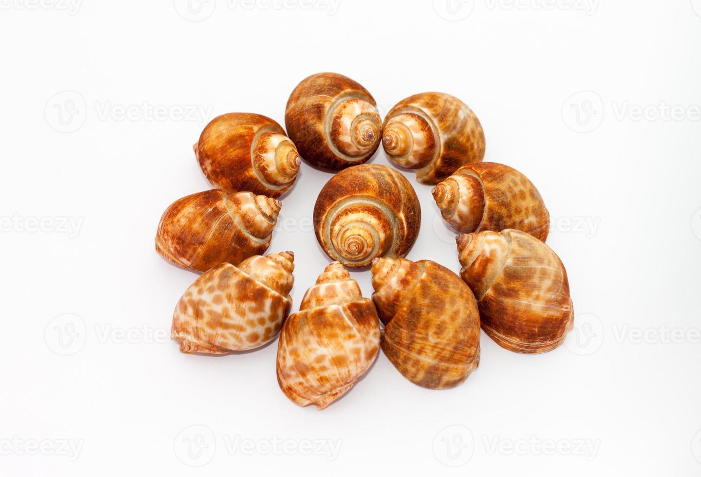 sloot snaills foto