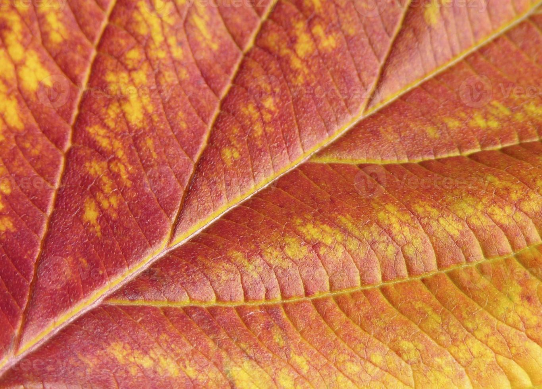 close-up herfstblad foto