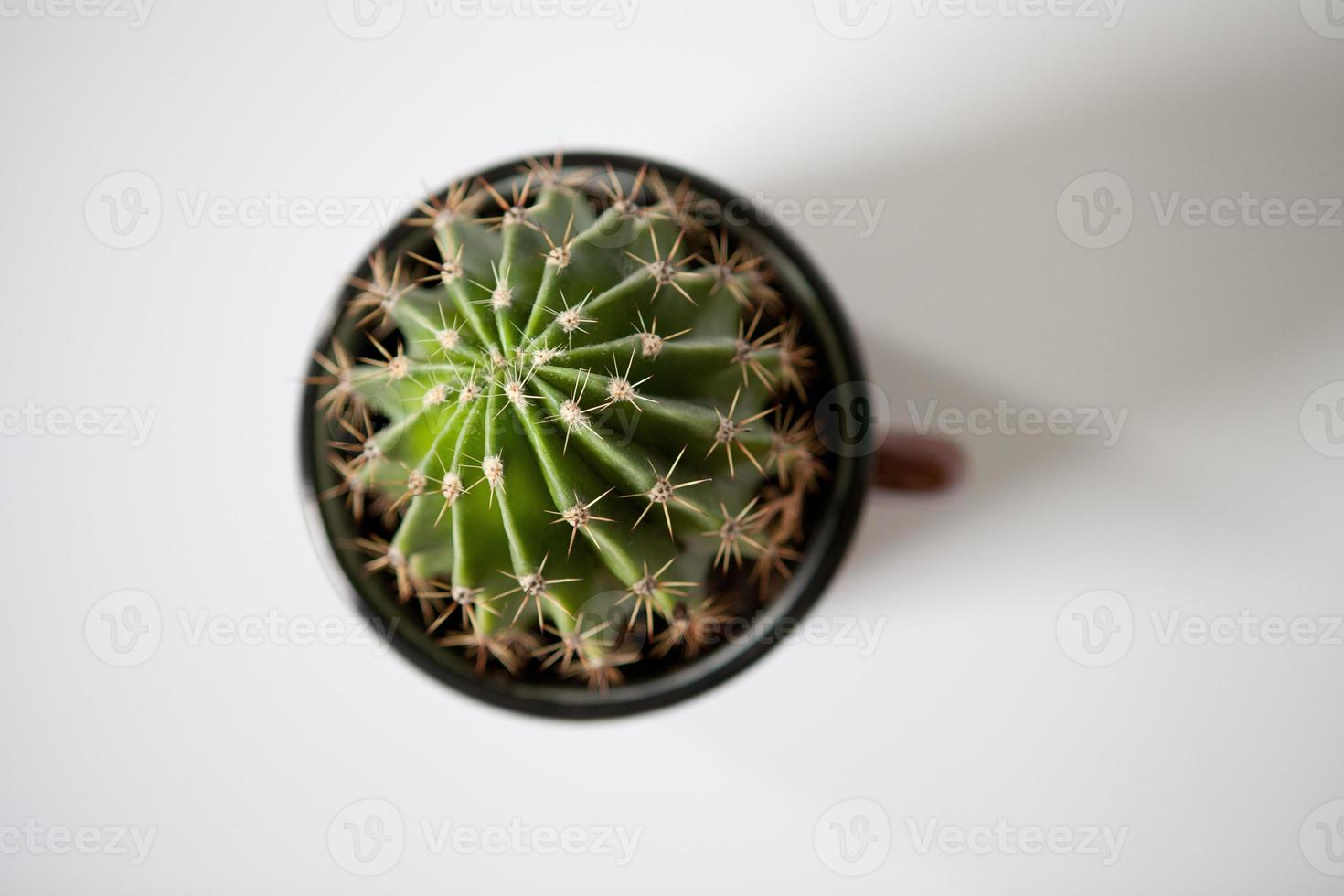sluit omhoog van cactus foto
