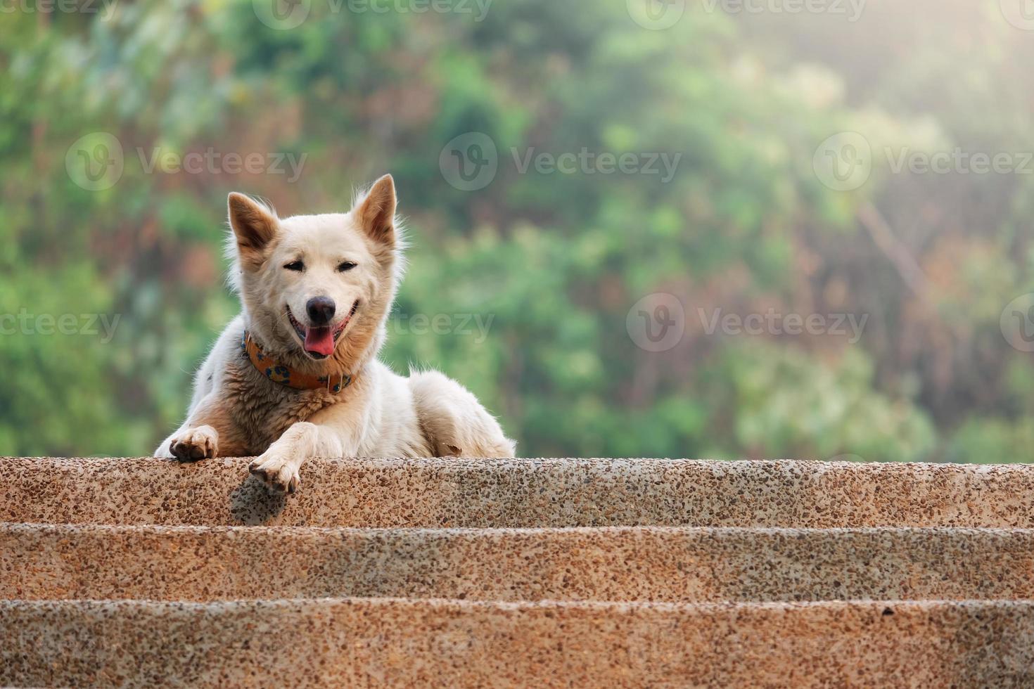 pluizige witte hond foto