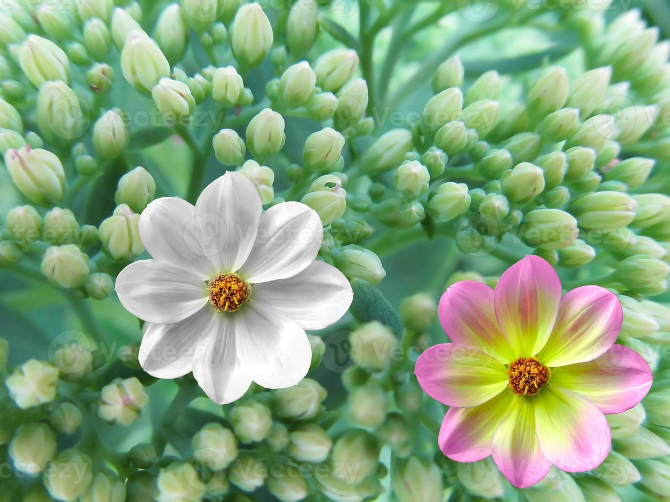 bloemen foto