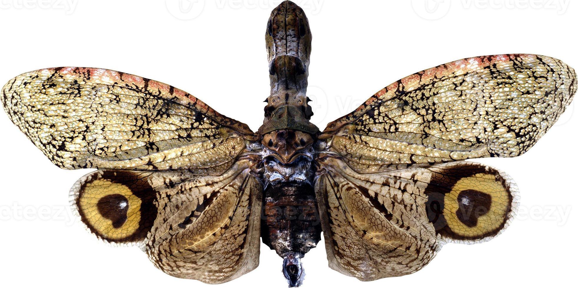 vlinder op een witte achtergrond foto