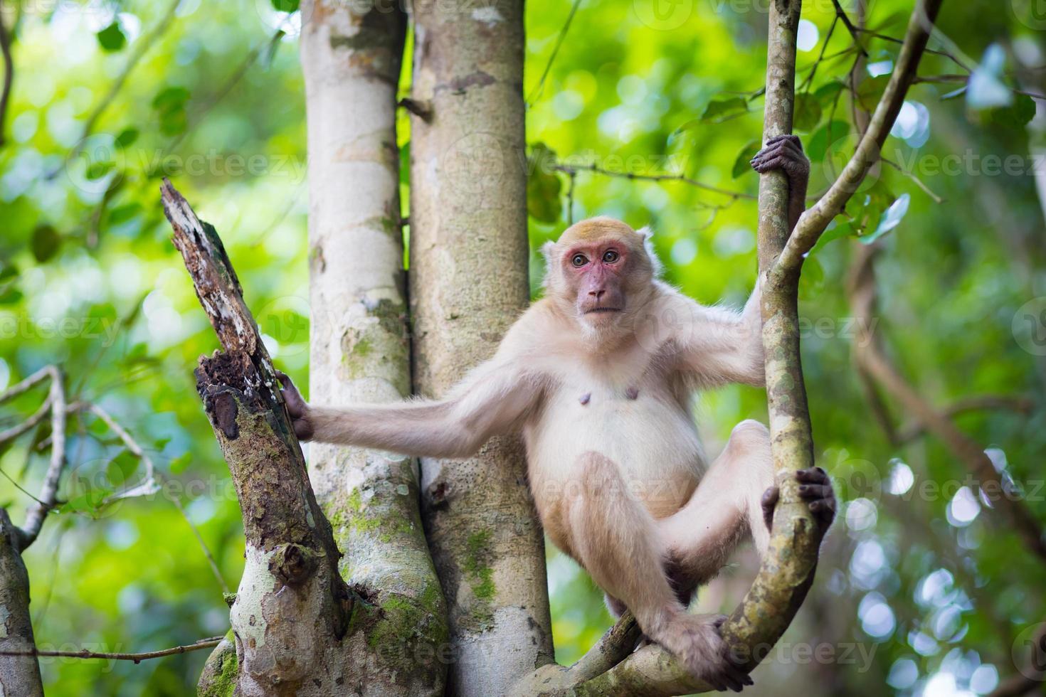 alleen aap in het bos foto