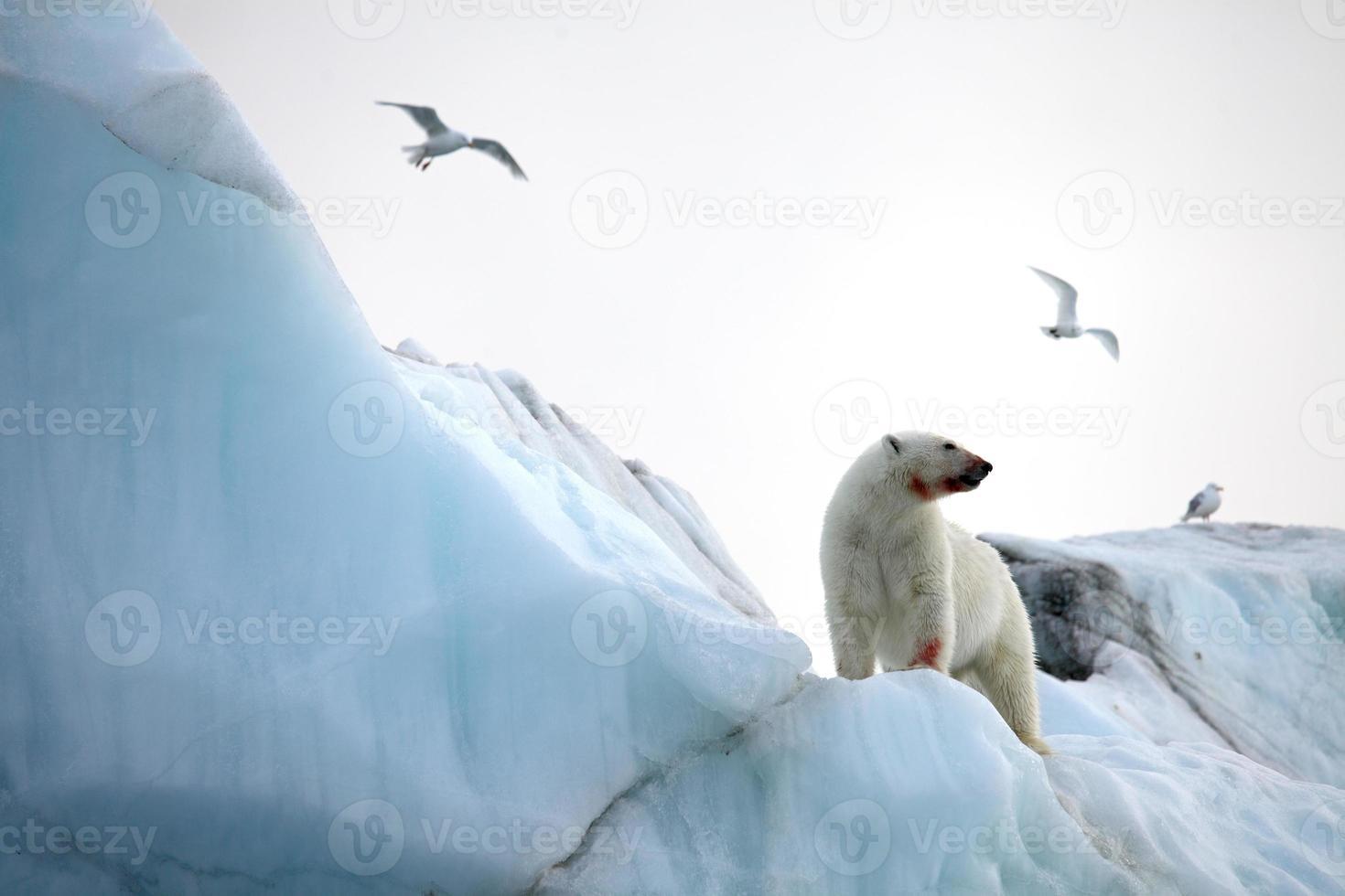 ijsbeer foto