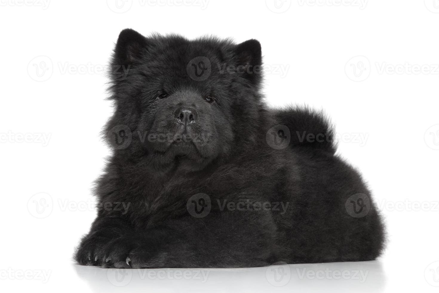 zwarte chow-chow langharige puppy foto