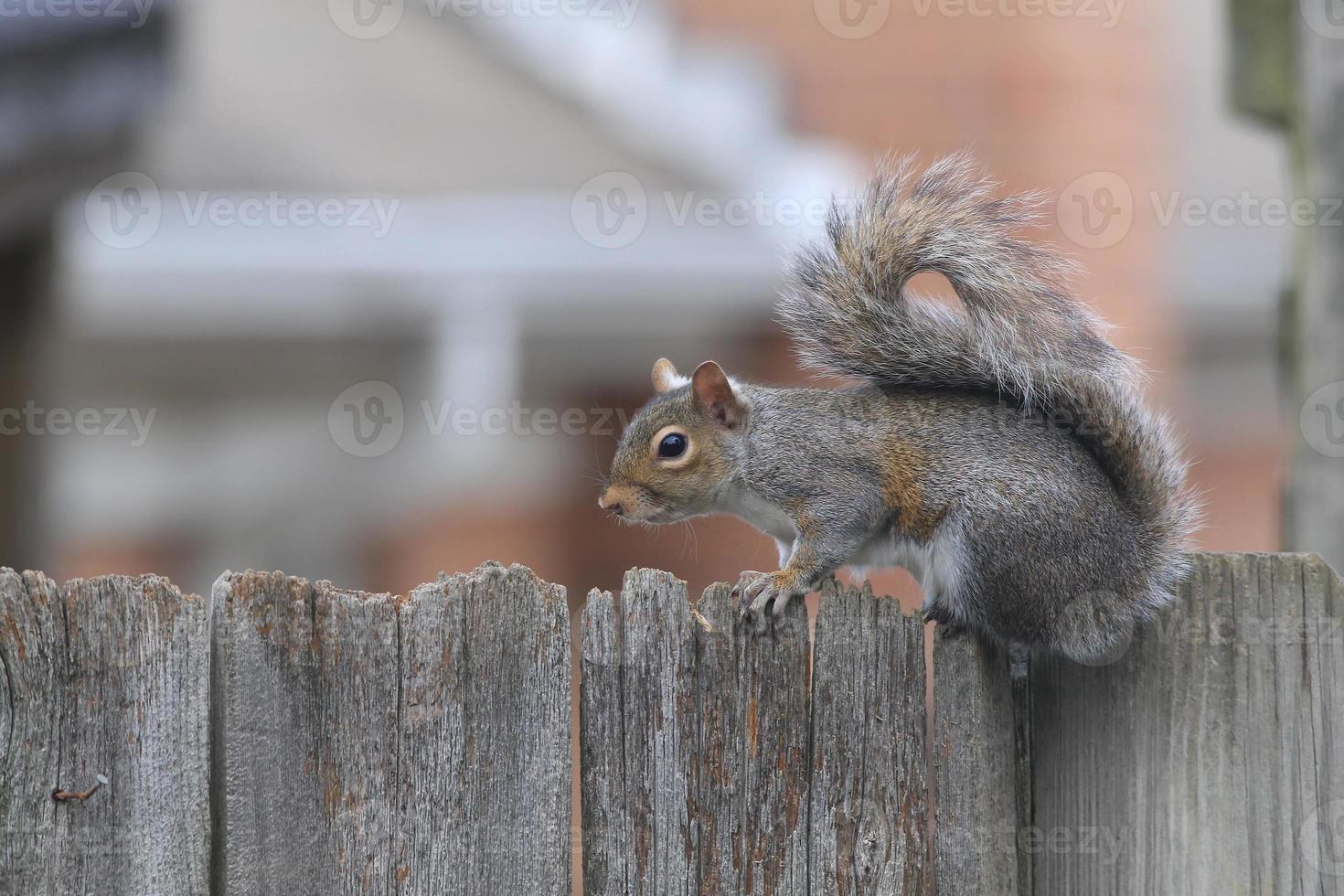buurt eekhoorn privacy hek foto