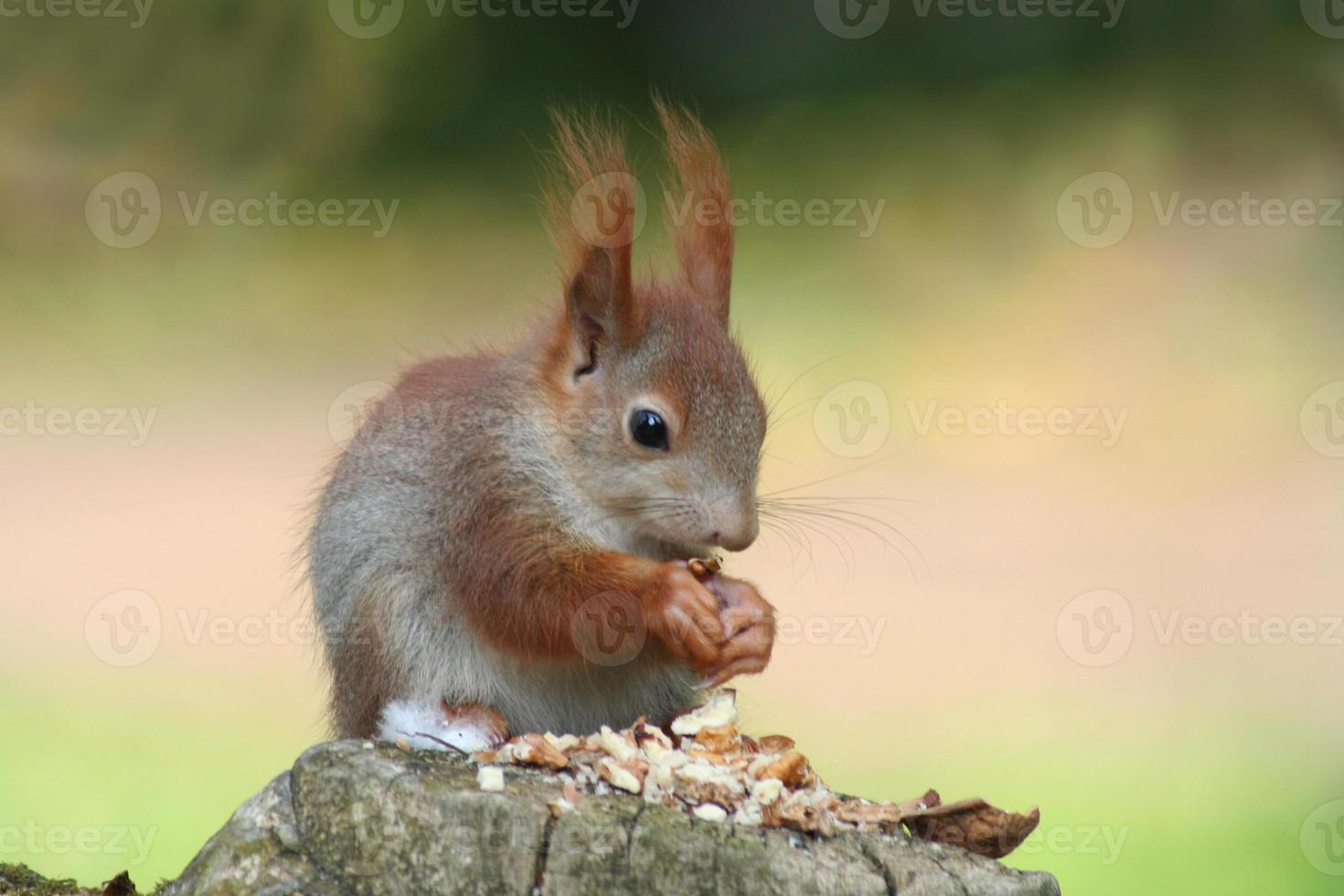baby eekhoorns foto