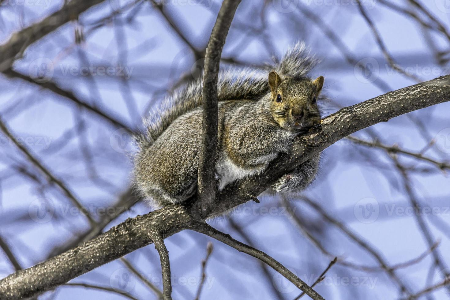 eekhoorn die in de winterzon zonnebaadt foto