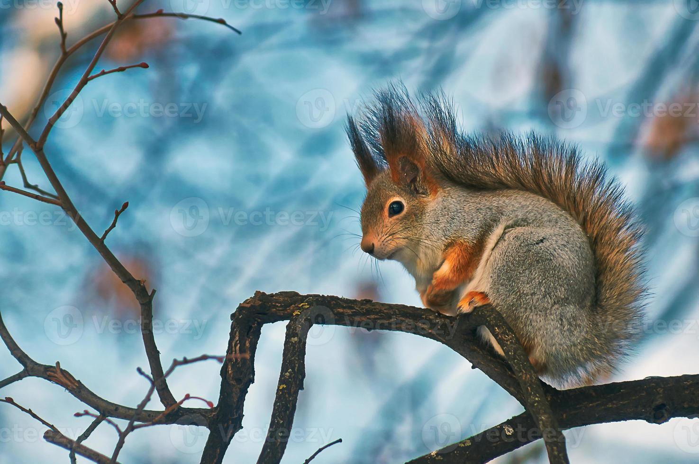 eekhoorn op een tak. foto