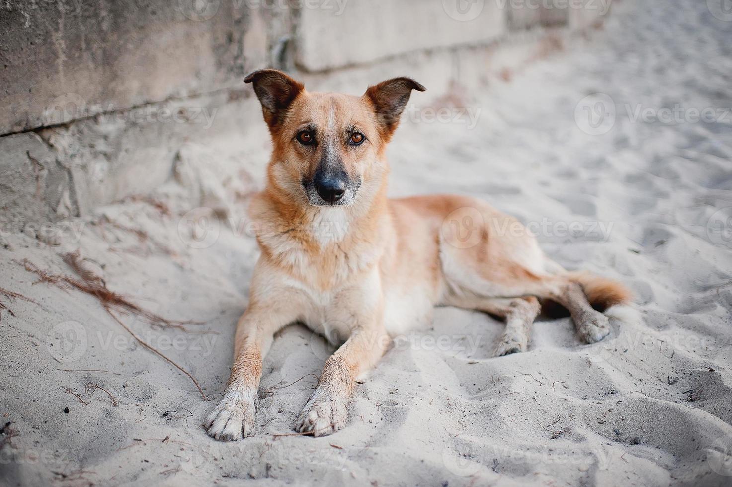 hond liggend op het zand foto