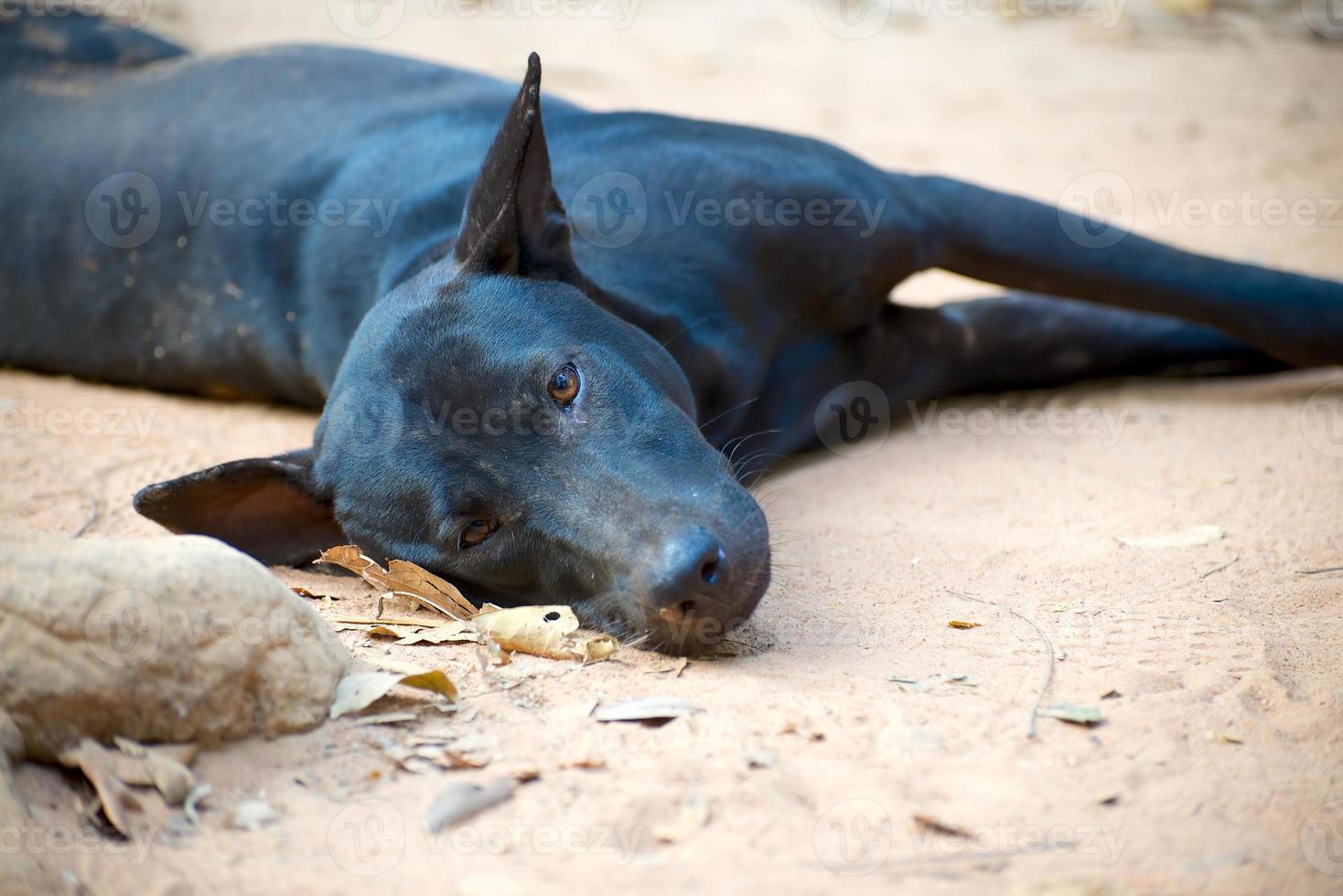 hond liggend op de weg foto