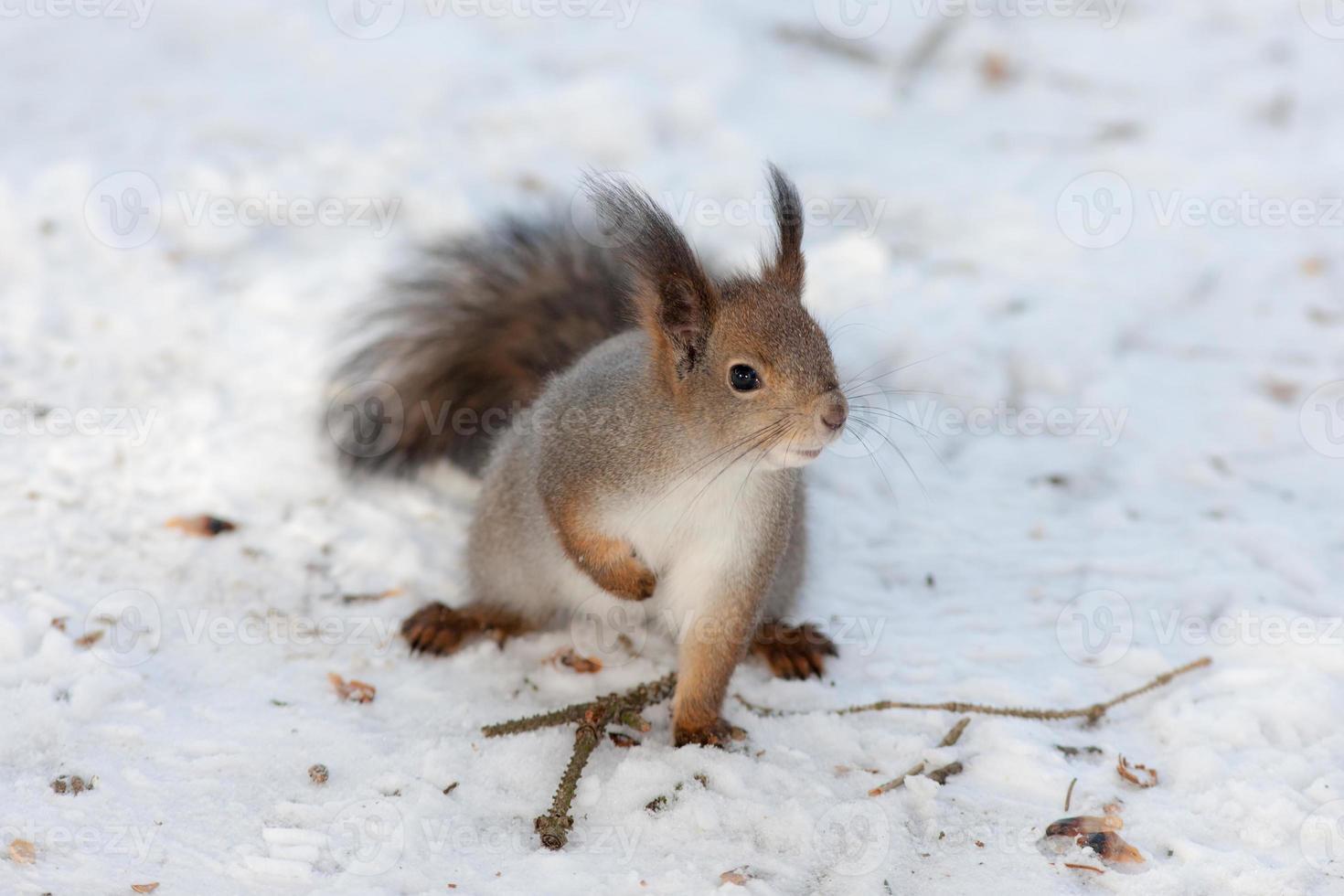 nieuwsgierige eekhoorn foto