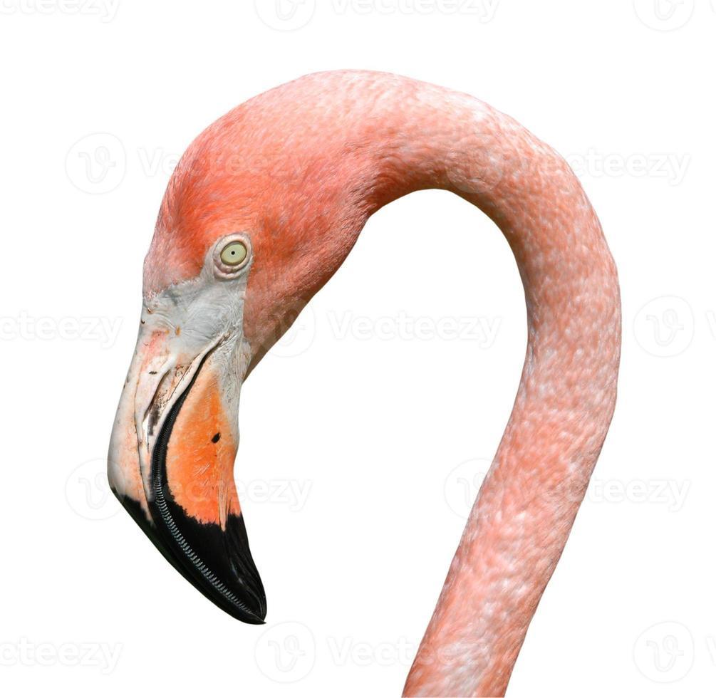 roze flamingo geïsoleerd foto