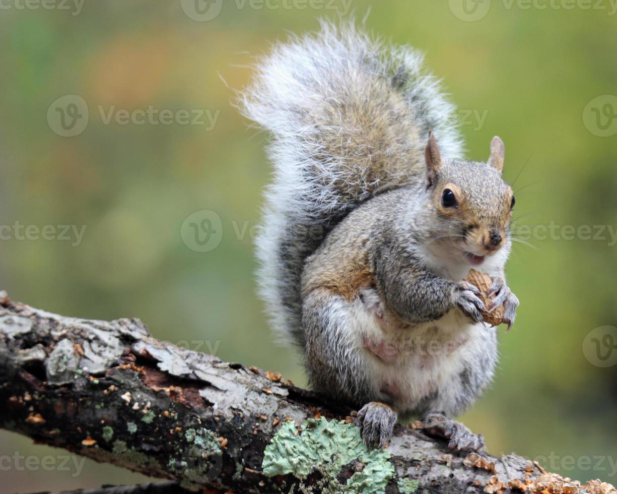 gelukkige eekhoorn foto