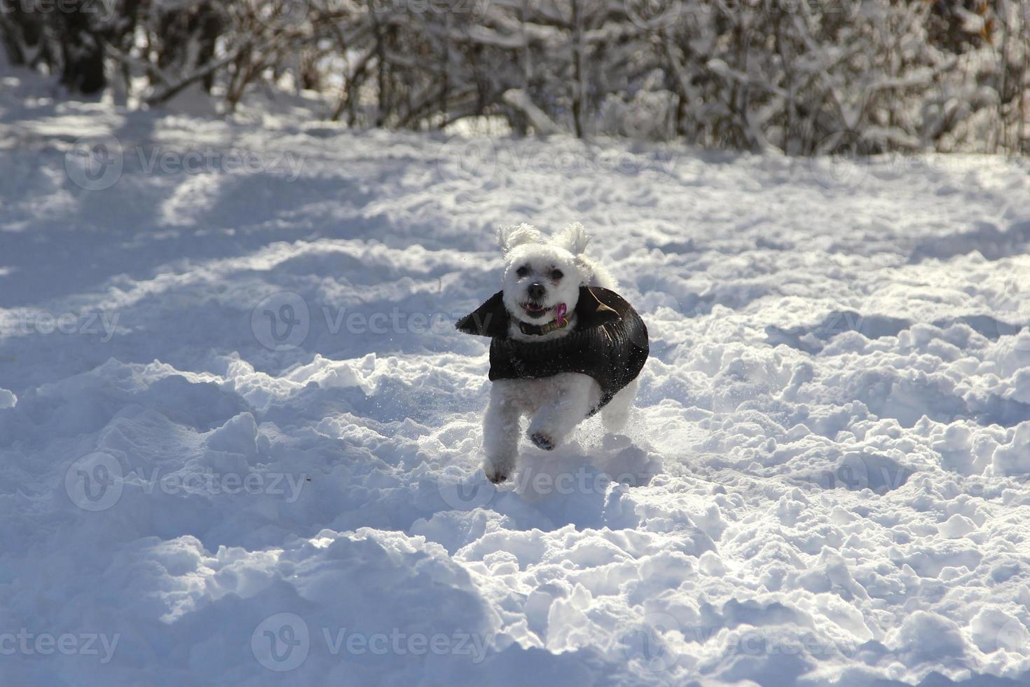 het plezier van sneeuw voor honden foto