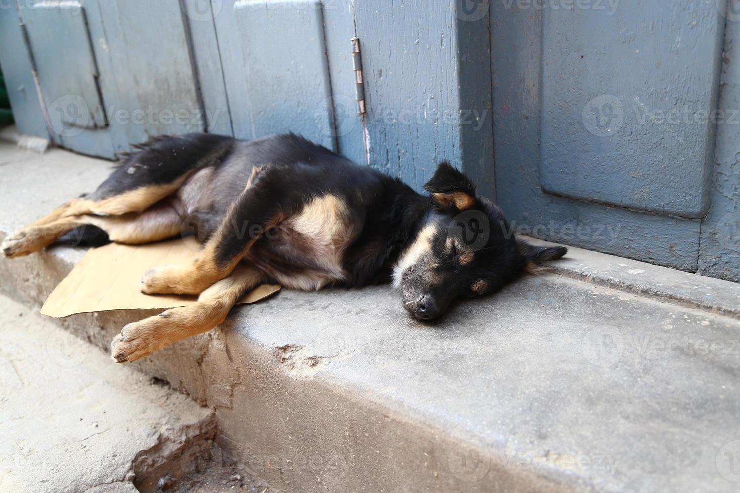 straathond foto