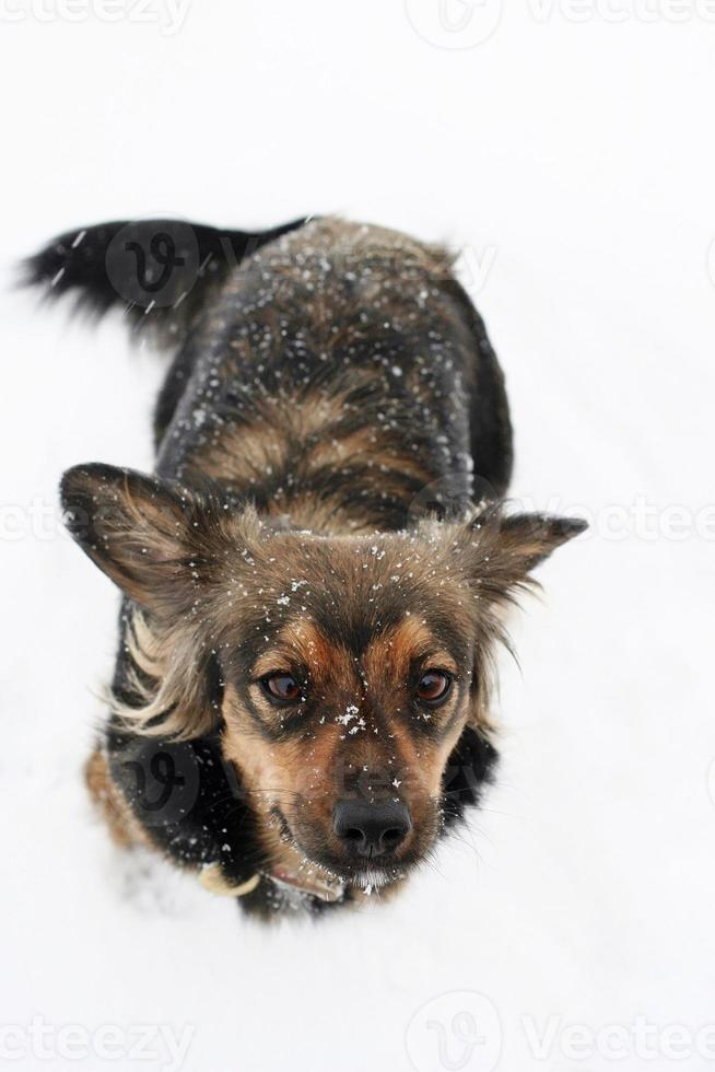 de hond in de sneeuw foto