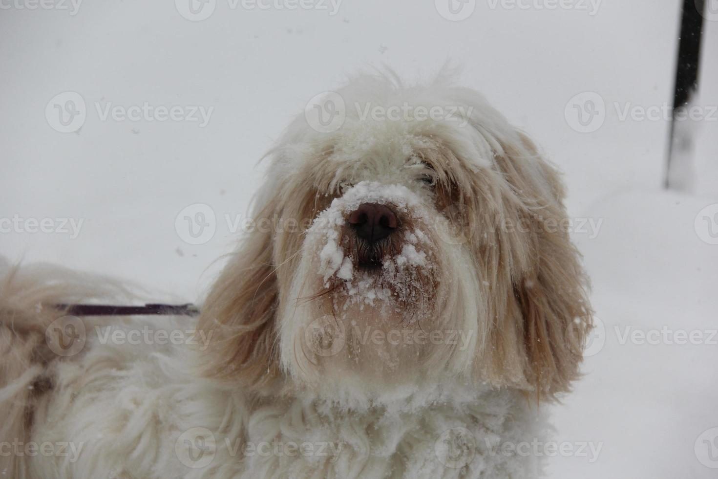 sneeuw hond foto