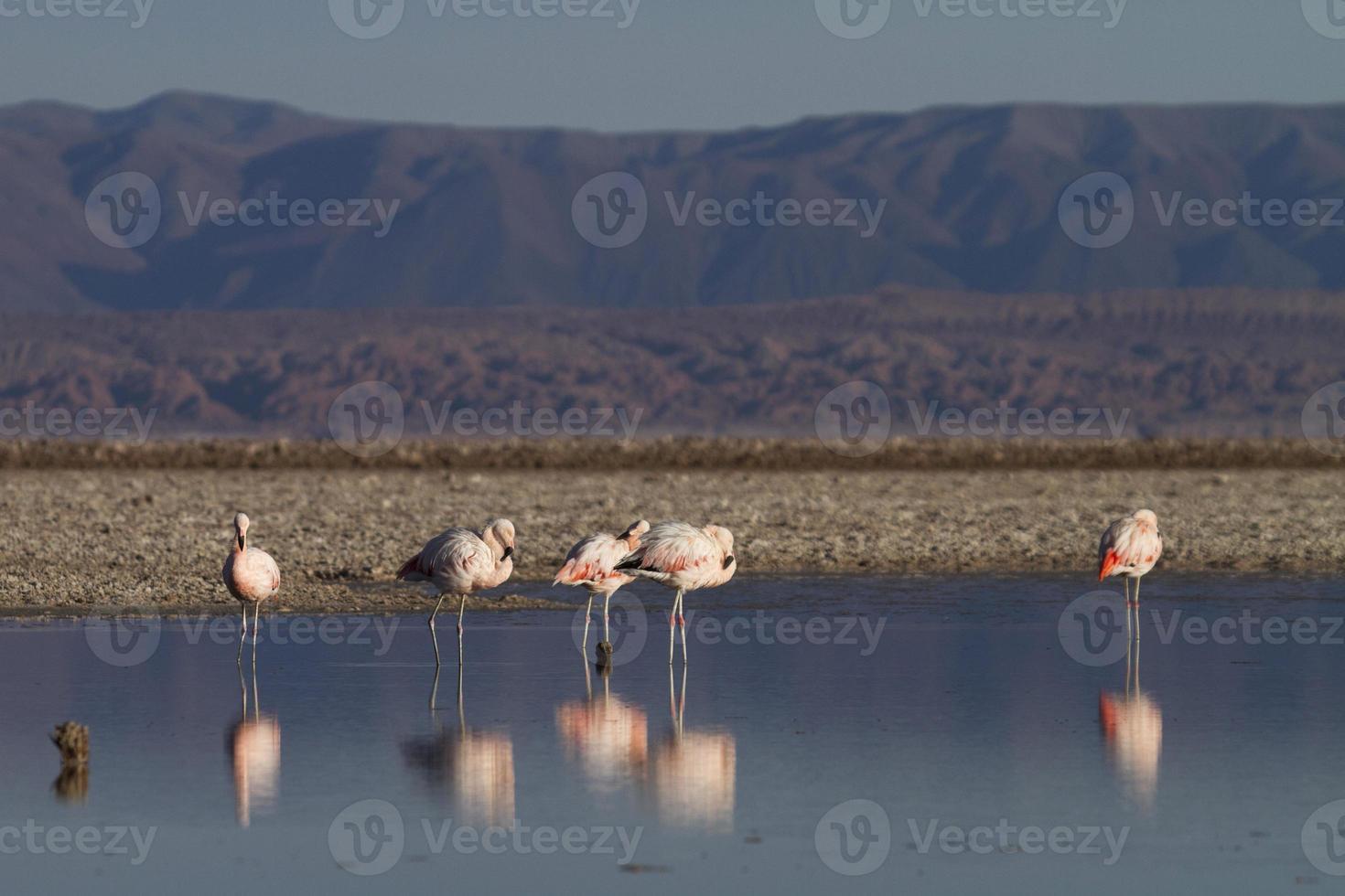 los flamencos nationaal reservaat foto