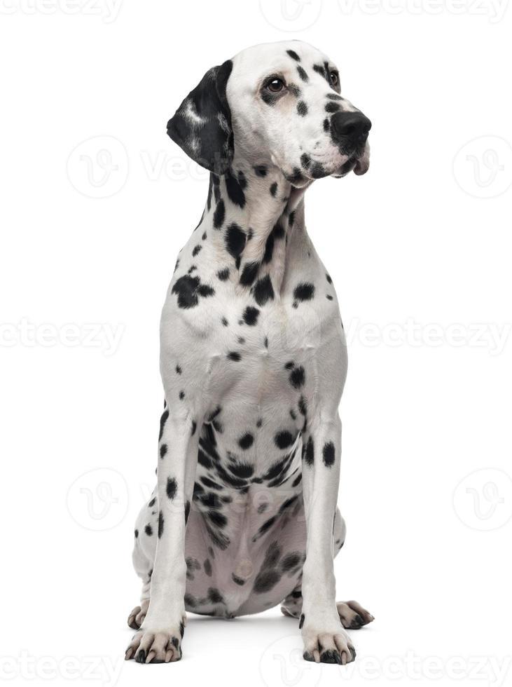 Dalmatische zitten, wegkijken, 1 jaar oud, geïsoleerd op wit foto