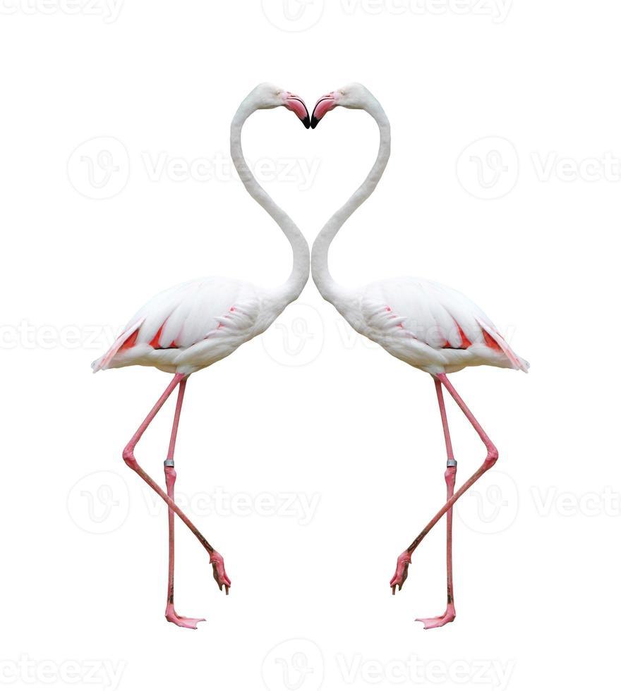 twee kleurrijke flamingo's bouwen een horen foto
