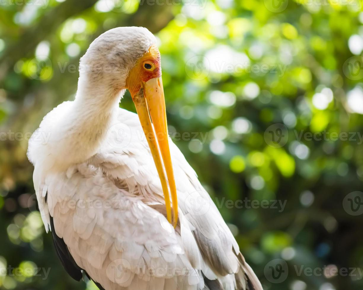 close-up flamingo in het park foto