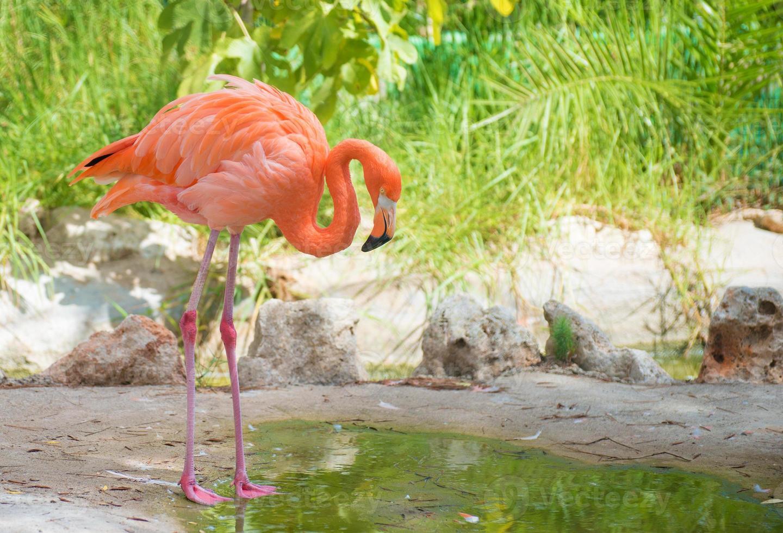 roze flamingo. foto