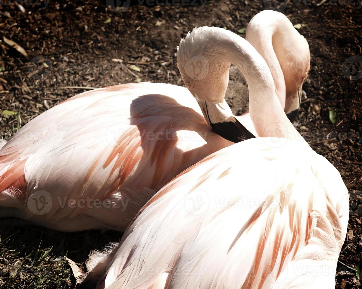 hou van flamingo's foto