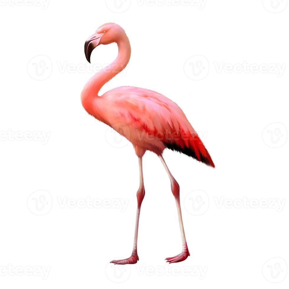 flamingo geïsoleerd op een witte achtergrond foto