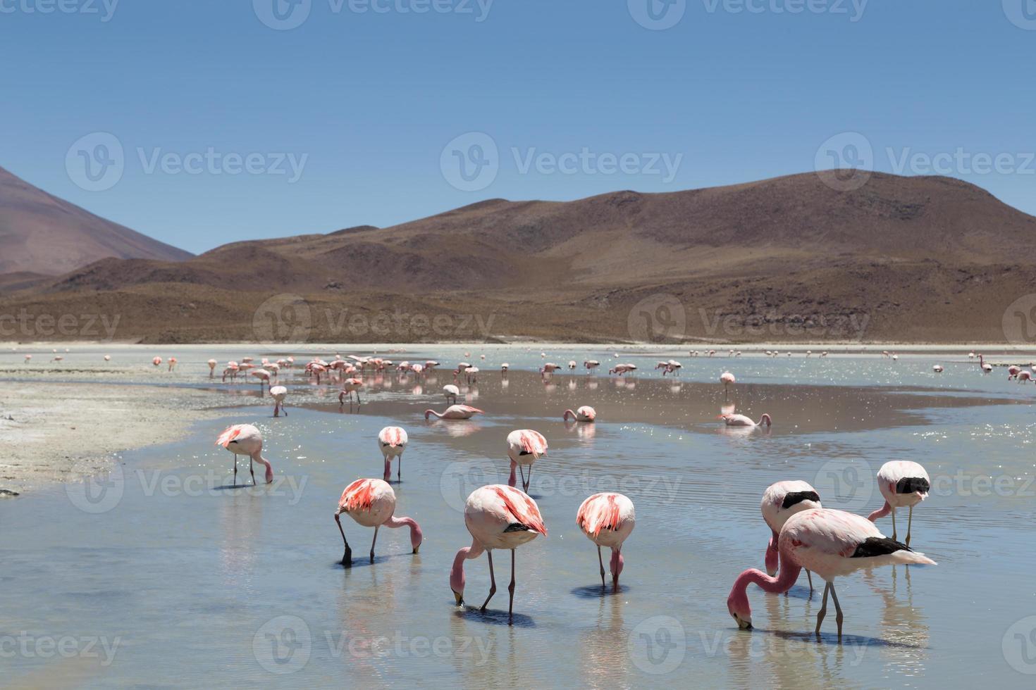 flamingo's op laguna hedionda foto