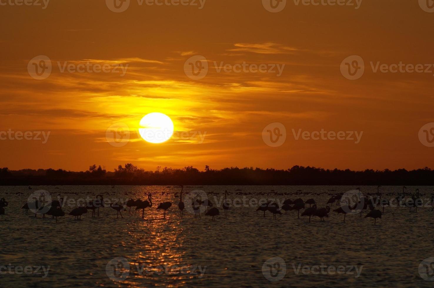 flamingo in zonsondergang foto