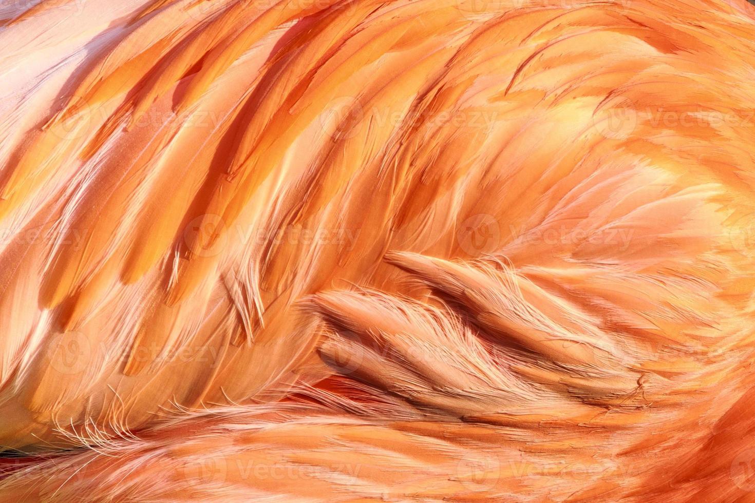 detail van flamingo's veer foto
